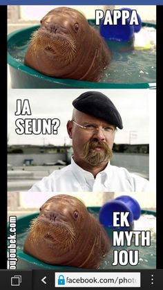 Afrikaans, South Africa, Funny Quotes, Animals, Language, Inspiration, Humor, Summer, Funny Phrases