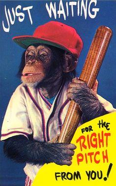 Don't strike out baseball chimp!