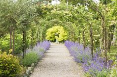 Walkway in the Walled Gardens July 2013 | Larchfield Estate