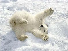 i love polar bears...