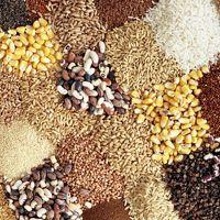 Recipe Categories || Cooking with Grain | Chef Brad's Fusion Grain ||