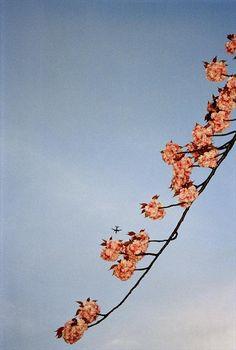 g b 2001 england london cherry tree with plane by chris steele-perkins Photographer Portfolio, Artist Portfolio, London Art Fair, Aperture Science, Group Photography, Photo Caption, Cherry Tree, Cherry Blossom, Magnum Photos