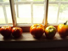 tomatoes ripening on window sill