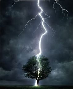 Lighting Strikes Tree