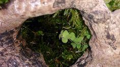 A little. World inside a piece of wood
