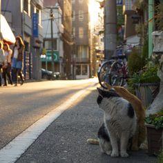 #tokyo         #Asakusa         #Japan         #cat    no other info