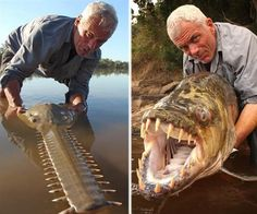 Giant fish that eats crocodiles and humans was discovered