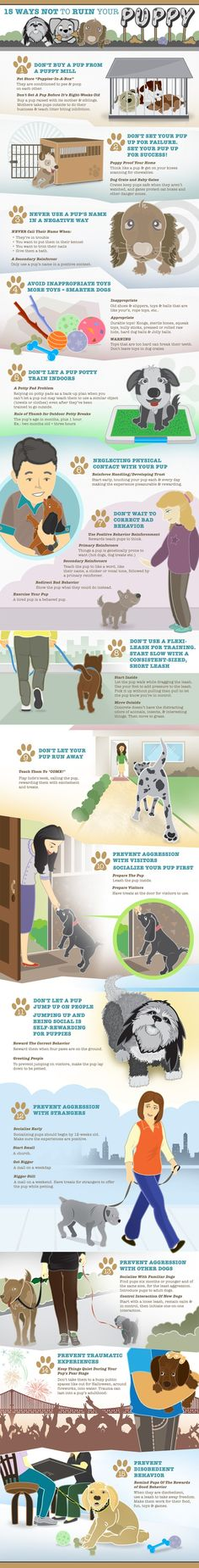 How to Not Ruin Your Puppy! This wonderfully comprehensive inforgraphic outlines the most important basics in puppy care and training. Learn how to grow yourself a happy, obedient pup! #puppies #dogtraining