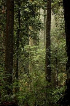 Forest in the clouds / West Vancouver, British Columbia, Canada