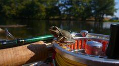 Una rana se sube a nuestro equipo para  tomar el sol.