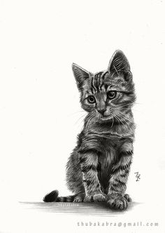 Kitten original graphite pencil drawing art by DrawingIllustration