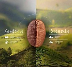 Coffee - arabica x robusta. Two different growing climates and styles gives you two very different coffee tastse and flavors.