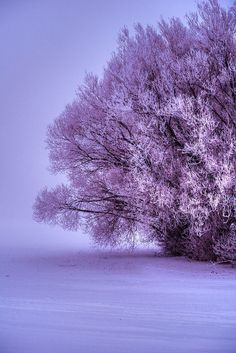Purple Winter Landscape