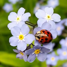 Little flowers and ladybird