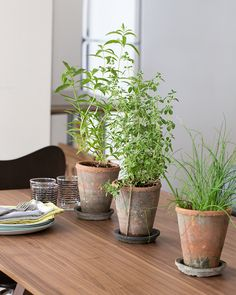 I just love the idea of inside herb gardens!!! Edible Centerpieces | Blue Apron