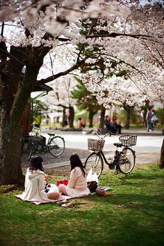 Cycling and picnic in park under the cherry blossoms. Sakura Blossoms, Japan