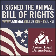I just signed the Animal Bill of Rights because I think ALL animals deserve basic legal rights, and I wanted to ask you to join me. Sign the Animal Bill of Rights today: Bill Of Rights, Stop Animal Cruelty, Save Animals, Love And Respect, Together We Can, Sea World, Animal Welfare, Animal Rights, Compassion