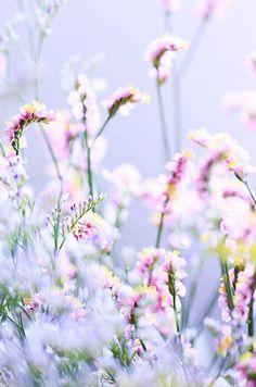In Bloom: Untitled | Flickr by sweetheart #flora