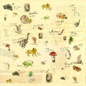 CHARLES DARWIN fabric: Animal and plant illustrations drawn with ink and fountain pen and text from origin of species