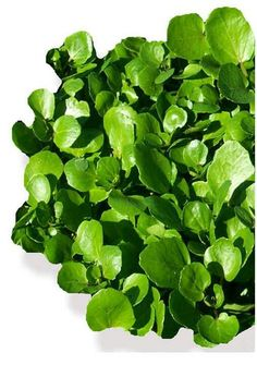 Watercress, with more calcium than a cup of milk and more iron than spinach, this green is a great addition to any salad or sandwich.