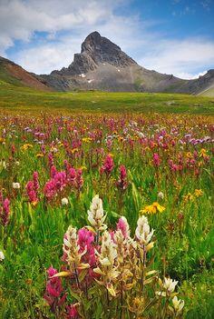 A grouping of paintbrush wildflowers appears similar to the shape of pointy 14er Wetterhorn Peak. Wetterhorn Basin, San Juan Range, Uncompahgre Wilderness near Ridgway, Colorado.