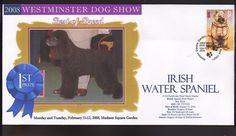 2008 DOG SHOW BEST of BREED Cv, IRISH WATER SPANIEL  | eBay
