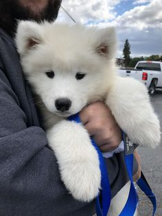 Babies Stuff 738801513856343756 - They Called Her A Samoyed, But I Really Think I Brought Home A Polar Bear. Meet Lola Source by leanamlal Baby Animals Pictures, Cute Puppy Pictures, Cute Animal Photos, Very Cute Puppies, Cute Baby Dogs, Adorable Dogs, Cute Fluffy Puppies, Cute Little Animals, Cute Funny Animals