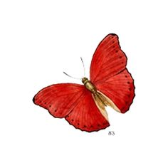 element28.png ❤ liked on Polyvore featuring butterflies, red, fillers, animals and backgrounds