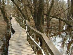 Tájegység: Pilis-Visegrádi h.   hossz: 3 km   szintkülönbség: 0 m   nehézség: Bármilyen babakocsival járható