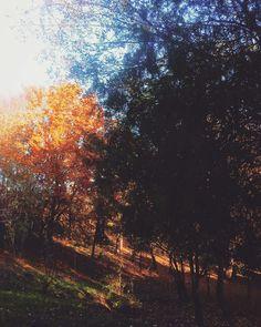 #favseason #novemberfalls #autumnlove #stillautumn #mykindoflove #sunset #sunset_madness #sunsetlover  #suceava.romania 🌰🍁🍂🌆