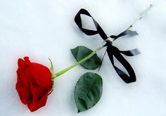 The exact rose from the Phantom of the Opera movie I love the red rosé with black ribbon :-)