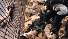 Petition: boycott of trade with South Korea until late martyr of cats and dogs in the country