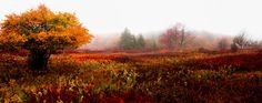Now in the Smithsonian: Autumn in Dolly Sods by AugenStudios.deviantart.com on @DeviantArt