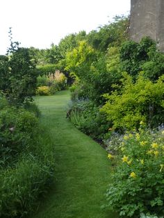 A winding lawn... NGS Gardens open for charity - Garden