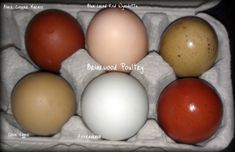 "Vancover Island B.C. - have blue laced red WYANDOTTE, CREAM LEGBAR-blue eggs, 4 types of MARANS,(order extra Marans as they can be hard to hatch)- SULMTALER -(Very rare, very tasty, quality meat birds-$12.00/egg)....and many more breeds.......... info. on breeding ""blue"" poultry & color combinations possible..... some birds imported from Greenfire farms Florida- be sure to keep a Journal of where you buy your eggs! Also read the incubating tips on this website."