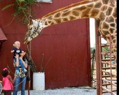 Get Away: Tennessee Safari Park, Alamo, TN. Located 75 miles from Memphis.
