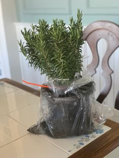 The Complete Guide to Growing Rosemary in Pots - Getting Rid Of Nats, Rosemary Plant, Garden Features, November 2019, Herbs, Pots, Creative, Yard, Blog