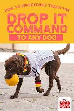 How to teach a dog to drop it or leave it on command. Dogs love to bring things to you, but do you want to know how to teach your dog to drop something? This is one of the must have dog obedience training tips you'll want to know. Dog Training Techniques, Dog Training Tips, Training Classes, Potty Training, Obedience Training For Dogs, Training School, Crate Training, Training Videos, Labrador Retriever