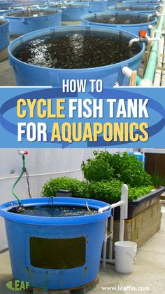 """Cycling"" can be one of the trickiest parts of setting up an aquaponics system. Cycling refers to the colonization of nitrifying bacteria in an aquaponic system to establish the nitrogen cycle. Aquaponics System, Hydroponic Farming, Aquaponics Greenhouse, Aquaponics Fish, Fish Farming, Greenhouse Ventilation, Permaculture, Aquaponique Diy, Nitrogen Cycle"