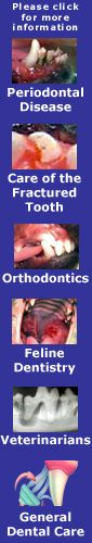 Endodontics: Care for the Fractured Tooth