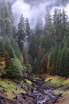 Willamette National Forest, Oregon.
