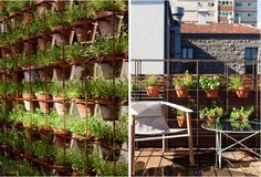 vertical wall garden using terra cotta pots set in a steel grid