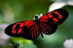 butterflies | Jen Maihack Photography · Butterfly Rainforest Part 1