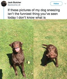 15+ Funny Pics for Your Tuesday and Everyday! #dogsfunnypics
