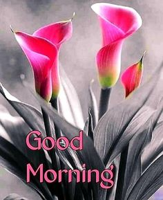 Good Morning Love Messages, Good Morning Quotes, Best Photo App, Ego Quotes, Morning Greetings Quotes, Cool Photos, Cleaning, Night, Good Morning Wishes