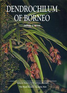 Dendrochilum of Borneo by Jeffrey J. Wood