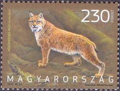 Eurasian lynx (Lynx lynx), stamp, MINT, 2013 - Fauna-stamps.com