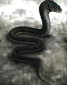 Possibly the Basilisk (snake serpent) that was in the Chamber of Secrets that was hidden in Hogwarts Castle in Harry Potter and the Chamber of Secrets Weird Creatures, Magical Creatures, Basilisk Harry Potter, Giant Snake, Classical Mythology, Reptiles, Harry Potter World, Harry Potter Snake, Mythological Creatures