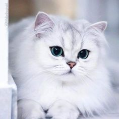 Funny Cats Photos Faces Ideas For 2019 Funny Cat Photos, Cute Animal Photos, Funny Animal Pictures, Funny Cats, Funny Animals, Cute Animals, Cute Baby Cats, Cute Cats And Kittens, Kittens Cutest