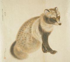 Tanuki by Sekine Untei (関根 雲停)
